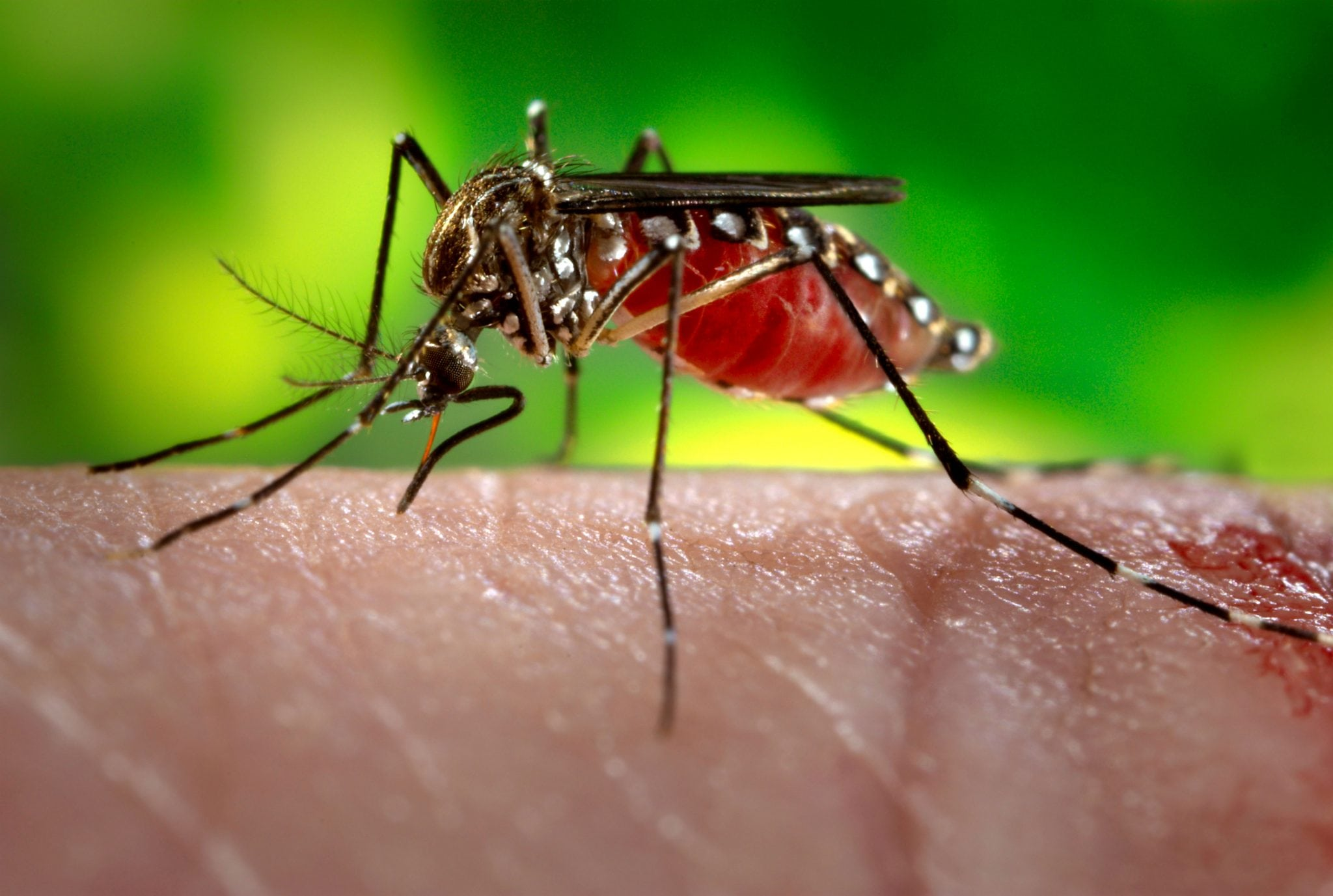 Keep Your Home Insect-free With Mosquito Pest Control Phoenix Services